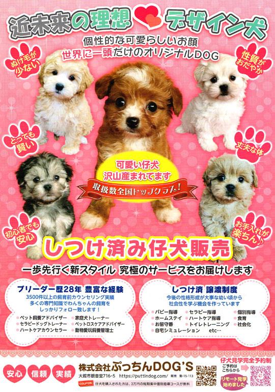 近未来の理想 デザイン犬 しつけ済み子犬販売